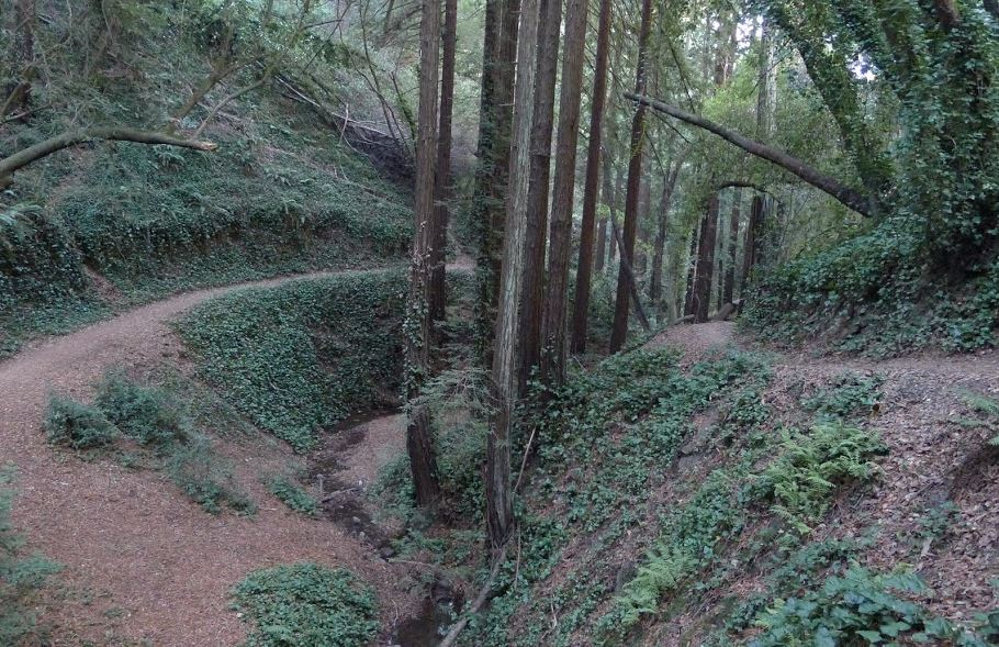PALOCOLORADO TRAIL.JPG